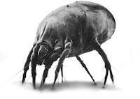 Αλλεργίες - μικρόβια (ακάρεα κλπ) στα